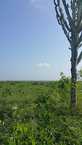 80 acres farm land for sale past malindi town